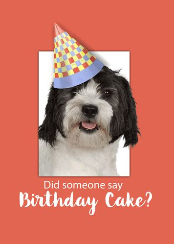 A Cute Dog Is Wearing A Birthday Hat