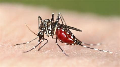 World Malaria Day: How a Nuclear Technique Could Provide a