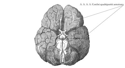 Revealing the Brain - Museum of the History of Science