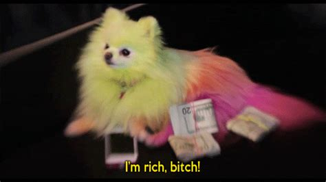 Rich Bitch GIFs - Find & Share on GIPHY