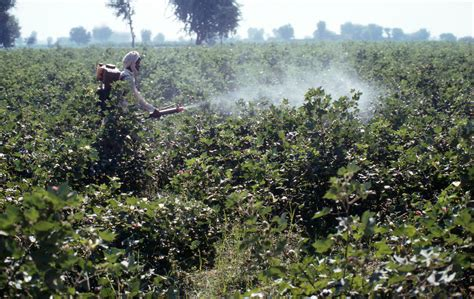 Better cotton threading its way towards global markets | WWF